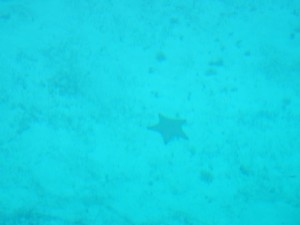 Starfish in 12 ft of water